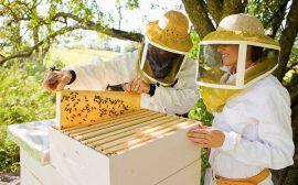 Идея прибыльного бизнеса: Пчеловодство