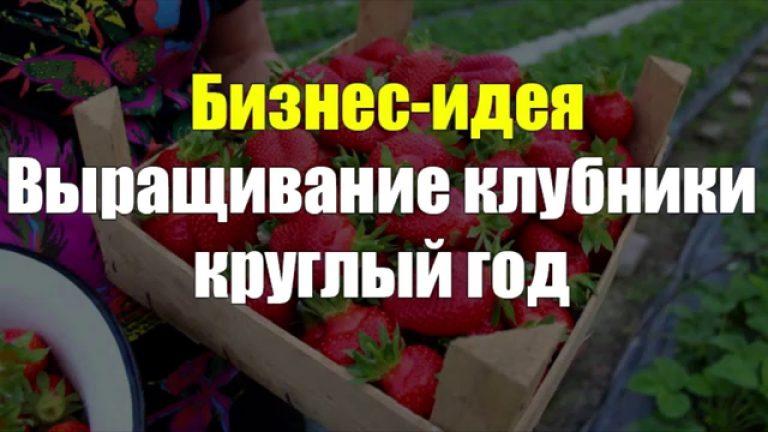 Бизнес идея выращивание клубники