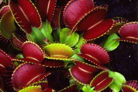 Бизнес идея: Выращивание и продажа хищных растений
