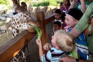 Бизнес-идея: Контактный мини-зоопарк