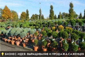 Бизнес идея: выращивание и продажа саженцев