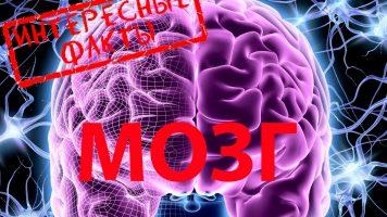 Немного фактов о мозге