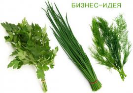 Бизнес идея: Выращивание зелени на продажу