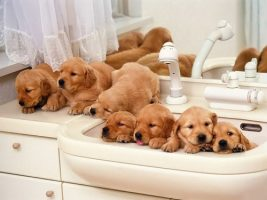 Бизнес идея: Разведение собак – доходное хобби