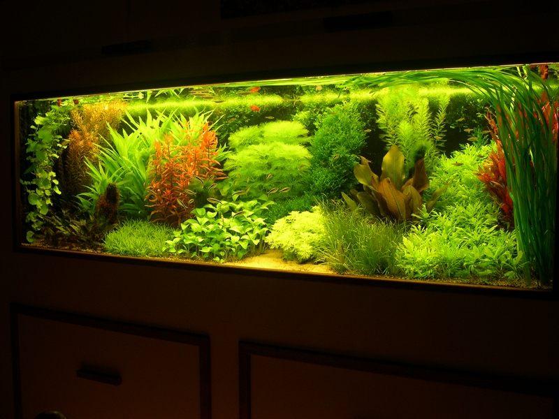 Бизнес выращивание в аквариуме 36