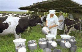 Бизнес-план: Молочная мини-ферма