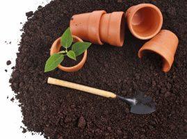 Бизнес идея: Производство грунтов для выращивания растений