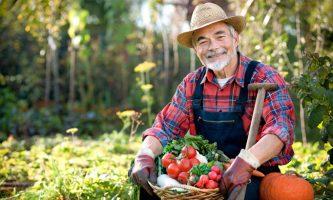 Бизнес идея: Как открыть фермерское хозяйство