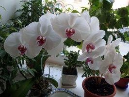 Бизнес идея: Выращивание орхидей