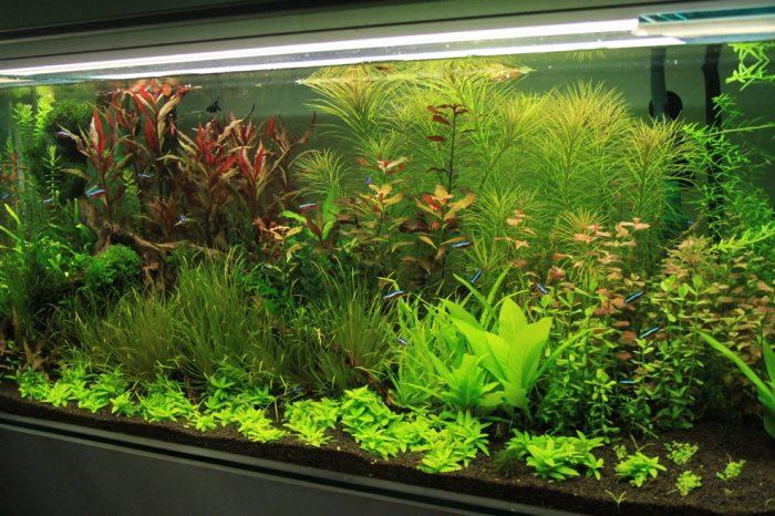 Бизнес идея: Выращивание элитных растений для аквариумов, подводный дизайн