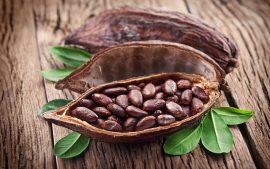 Бизнес-идея: производство какао