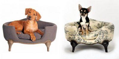 Бизнес-идея: Производство мебели для домашних животных