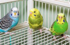 Бизнес идея: Разведение попугаев