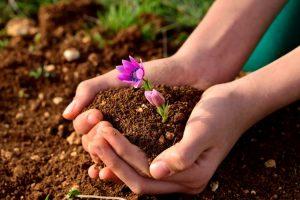 Бизнес идея: Продажа качественных почвенных смесей (чернозема)