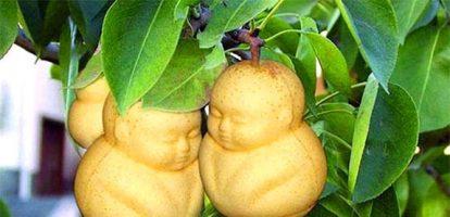 Бизнес-идея: Выращивание фигурных овощей и фруктов