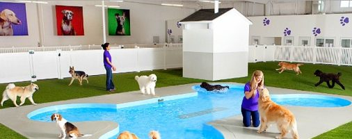 Бизнес-идея: Гостиница для животных