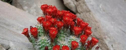 Бизнес-идея: Выращивание кактусов