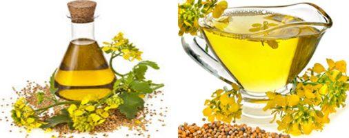 Бизнес-идея: Производство рапсового масла