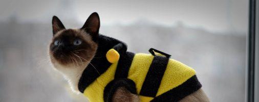 Бизнес-идея: Пошив одежды для домашних животных