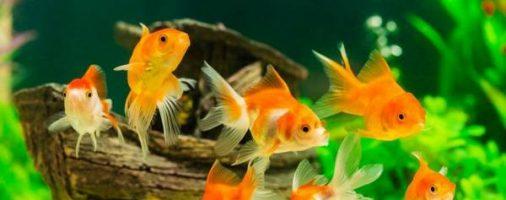 Бизнес-идея: Разведение аквариумных рыбок