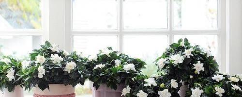 Бизнес-идея: Выращивание комнатных растений