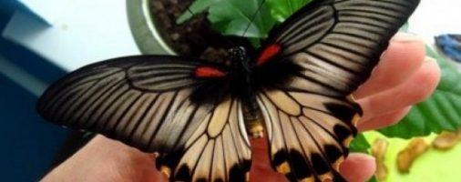 Бизнес-идея: Разведение бабочек