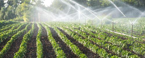 Бизнес-идея: Производство тепличных систем орошения почвы