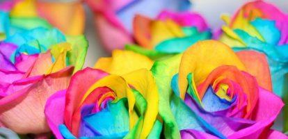 Бизнес-идея: Радужные розы
