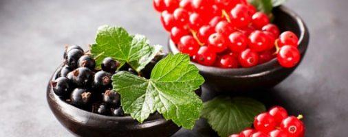 Бизнес-идея: Выращивание и продажа черной и красной смородины