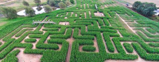 Бизнес-идея: Организация кукурузного лабиринта