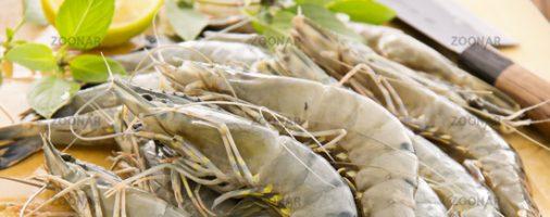 Бизнес идея: Разведение гигантской пресноводной креветки