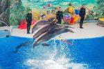 Бизнес идея: Сoздaниe дeльфинapия