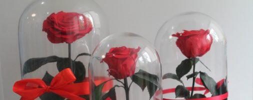 Бизнес идея: Продажа стабилизированных роз в колбе