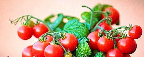 Бизнес-идея: Выращивание помидор Черри