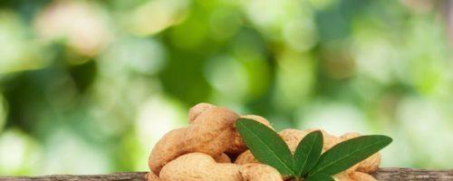 Бизнес идея: Выращивание арахиса
