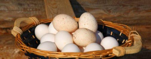 Бизнес-идея: Производство и продажа куриных яиц