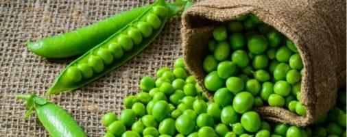 Бизнес-идея: Выращивание и переработка гороха